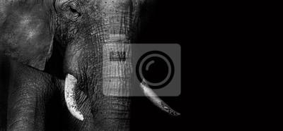 Canvas print Elephant (creative edit)