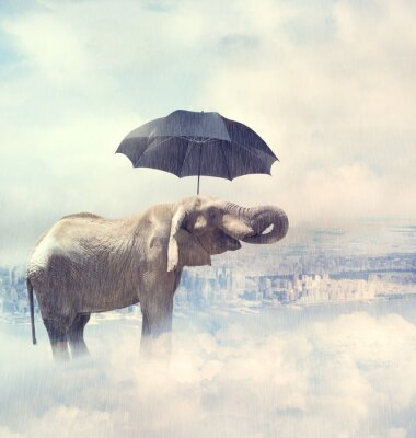 Canvas print Elephant enjoying rain avobe the city on the clouds