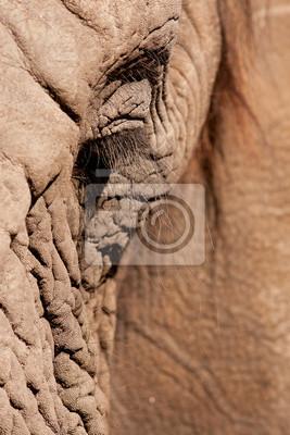 Canvas print Elephant Eye Close up