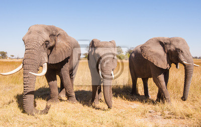 Canvas print Elephant Herd