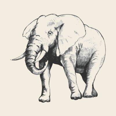 Canvas print Elephant Sketch