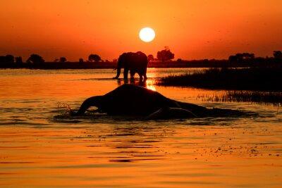 Canvas print Elephant sunset