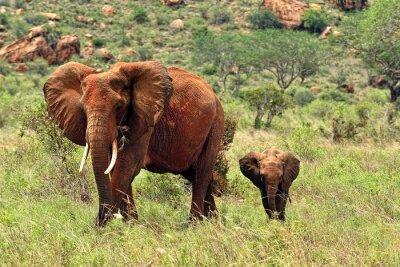 Canvas print Elephants