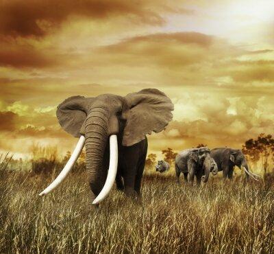 Canvas print Elephants At Sunset