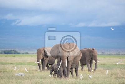 Canvas print elephants in Amboseli / family