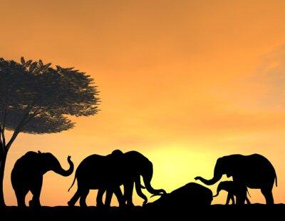 Canvas print Elephants Morn Their Dead at sunset, a very tender scene.