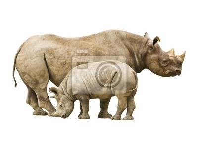 Canvas print Endangered Black Rhinoceros