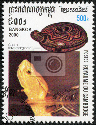 Canvas print Endangered Chinese Box Turtle, Cuora flavomarginata