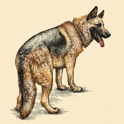 Canvas print engrave dog illustration