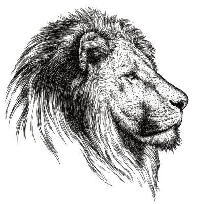 Canvas print engrave lion illustration