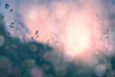 Canvas print Fantasy sunset bokeh blurred meadow background
