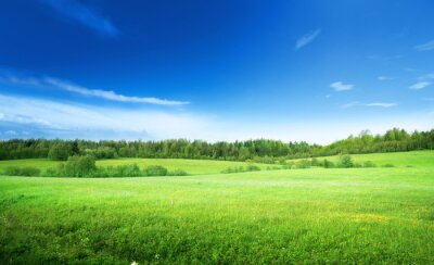 Canvas print field of grass and perfect sky