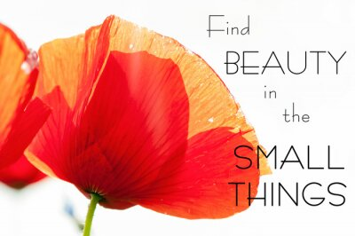 Canvas print Find beauty in the small things. Motivation inspiring quote
