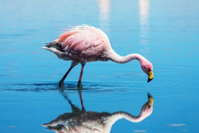 Canvas print Flamingo