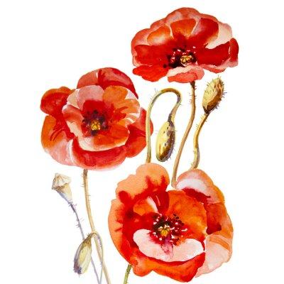 Canvas print Flower field poppy