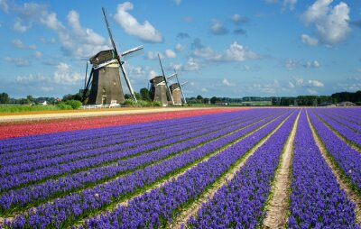 Canvas print Flowers and windmills in Holland