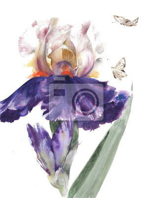 Flowers garden irises beautiful spring blossom watercolor painting illustration isolated on white background