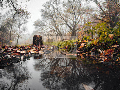 Canvas print Foggy morning , reflected in the autumn river.