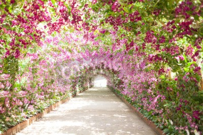 Canvas print footpath in a botanical garden with orchids lining the path.