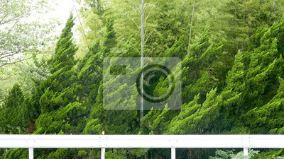 Forest green trees were blowed by heavy wind