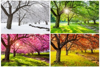 Canvas print Four seasons with japanese cherry trees in Hurd Park, Dover, New Jersey