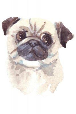 Canvas print French bulldog illustration
