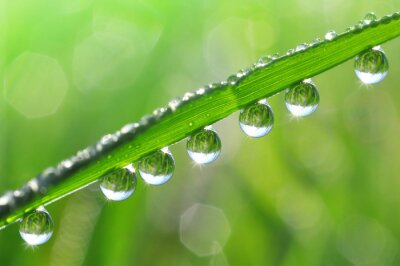 Canvas print Fresh grass with dew drops close up