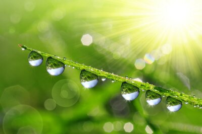 Canvas print Fresh green grass with dew drops closeup. Nature Background