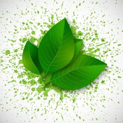 Fresh green leaves on bright green splashes.