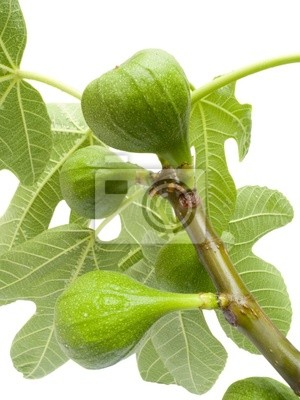 Fruits of a tree of a fig with leaves