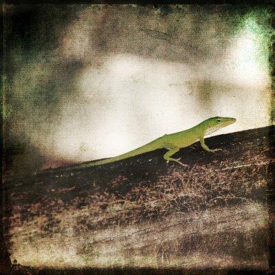 Canvas print Gecko Green Cameleon Lizard on Brown Wood Branch