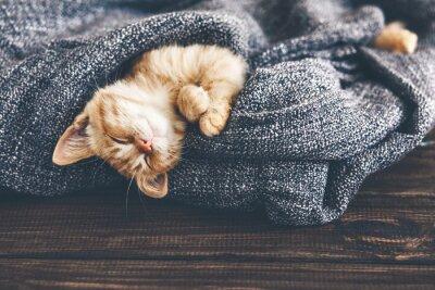 Canvas print Gigner kitten sleeping