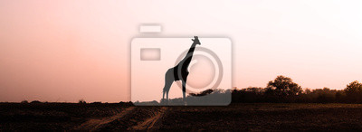 Canvas print Giraffe Silhouette at Sunset