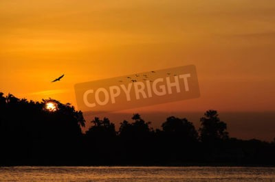 Golden Sunset over sea with bird flying