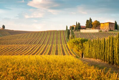 Canvas print Golden vineyards in autumn at sunset, Chianti Region, Tuscany, Italy