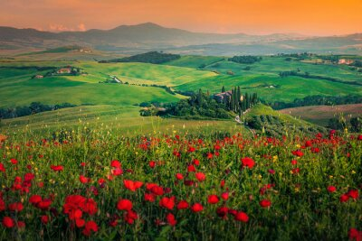 Canvas print Grain fields with red poppies at sunset in Tuscany, Italy