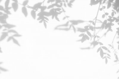 Canvas print Gray shadow of the leaves on a white wall. Abstract neutral nature concept background. Space for text.