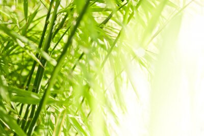 Canvas print Green bamboo background