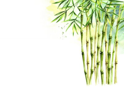 Canvas print Green bamboo background, stems and leaves, Asian rainforest. Watercolor hand drawn  isolated illustration