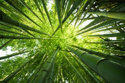 Canvas print Green bamboo nature backgrounds