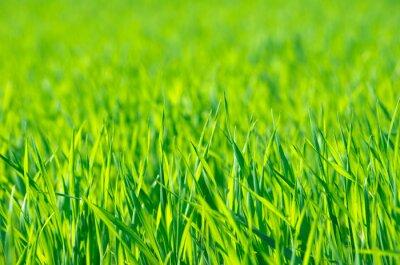 Canvas print Green grass