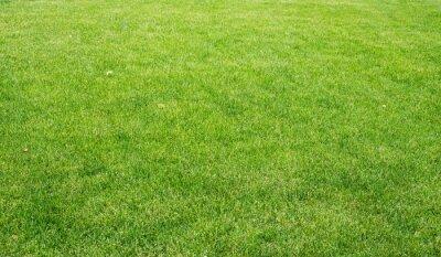 Canvas print Green lawn