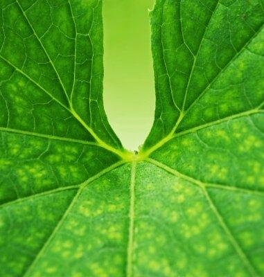 Canvas print Green leaf background