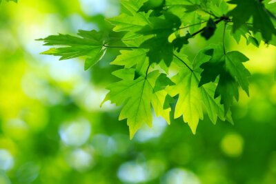 Canvas print green leaves