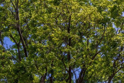 Green leaves on a tree blowing in the wind image with copy space in horizontal format