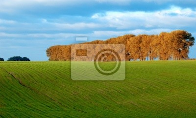 Green pasture and trees
