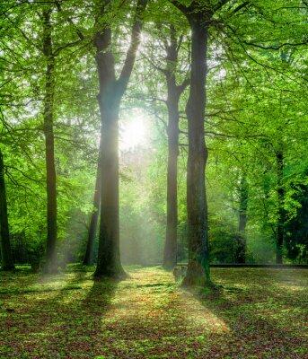 Canvas print grüner Wald im Sommer mit Gegenlicht