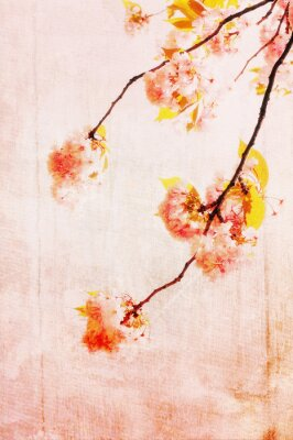 Canvas print Grungy background with cherry blossom