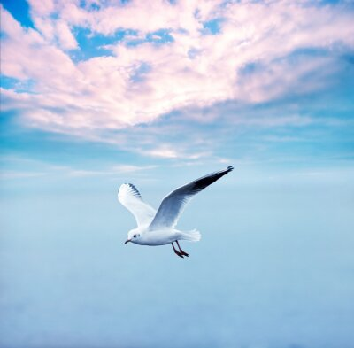 Canvas print gull soaring against a clouds sky