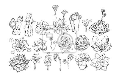 Hand drawn vector abstract ink graphic brush textured sketch drawing big collection set with succulent and cactus flowers isolated on white background.Wedding and Birthday decoration elements